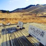 【近畿 砥峰高原】 紅葉の綺麗な山へ出かけよう!