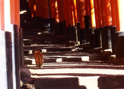 #ちょい旅 私なりの「京都一周トレイル ~東山コース~」