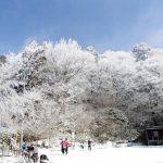 【関西-金剛山】スタッフが選ぶ冬の低山(雪山)おすすめ絶景スポット16/24