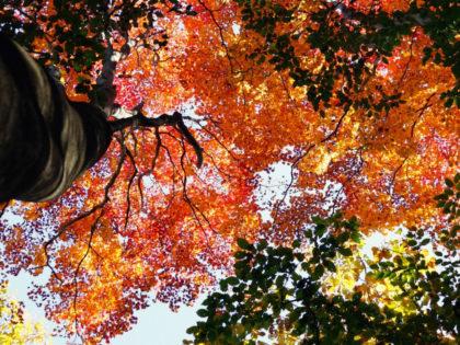 秋山を楽しむために押さえておきたい3つのポイント