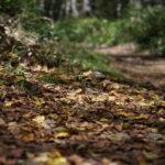 お手軽日帰りハイク 「入笠山」(好日山荘100名山)で秋の入口を体感